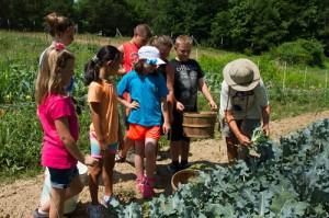 Junior Chefs help farmer Cathy Jones harvest broccoli at Perry-winkle Farm