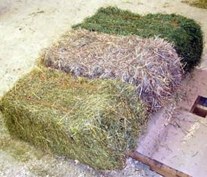 Forage hay bales (Michigan State University Cooperative Extension)