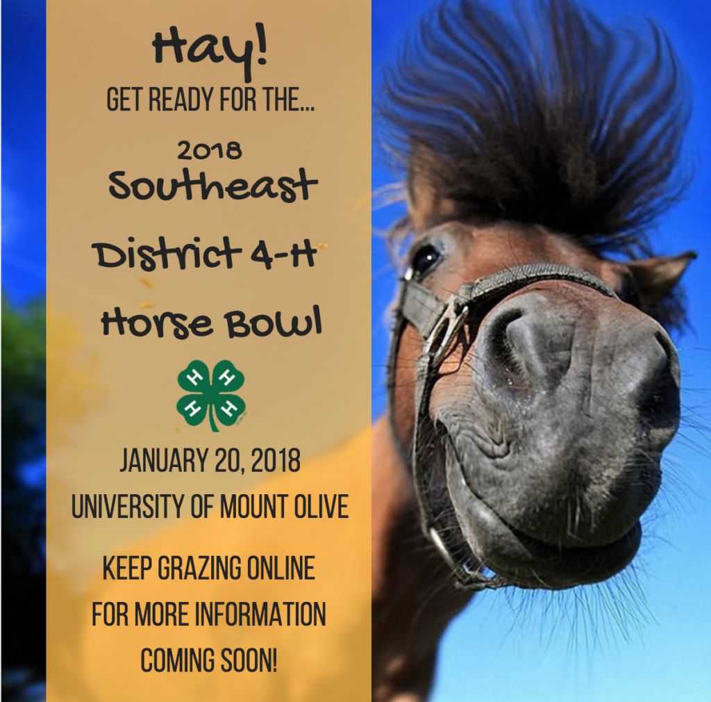 Horse Bowl poster
