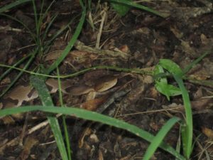 Cover photo for Summertime Snakes