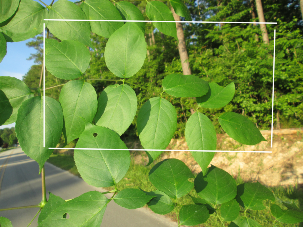 Image of a non-leaf