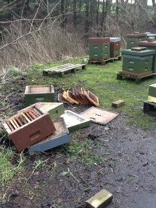 Cover photo for How to Protect Your Beehives From Mosquito Spraying Following a Hurricane