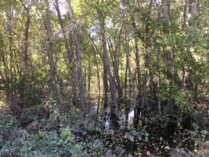 flooded timber stand