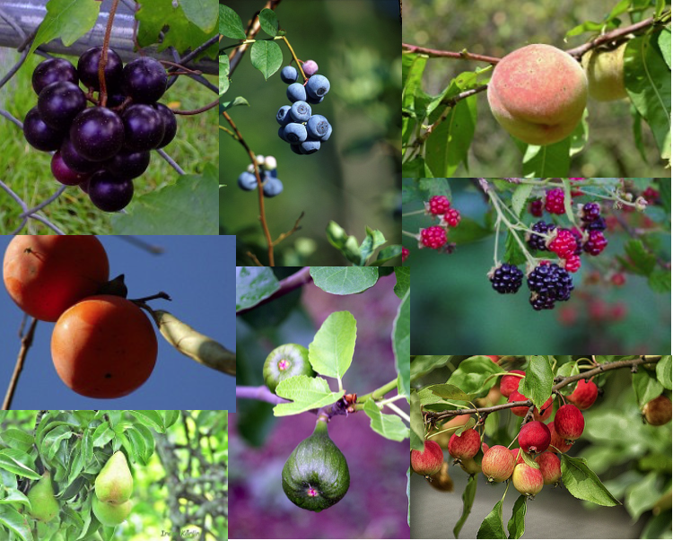 Image of fruit trees