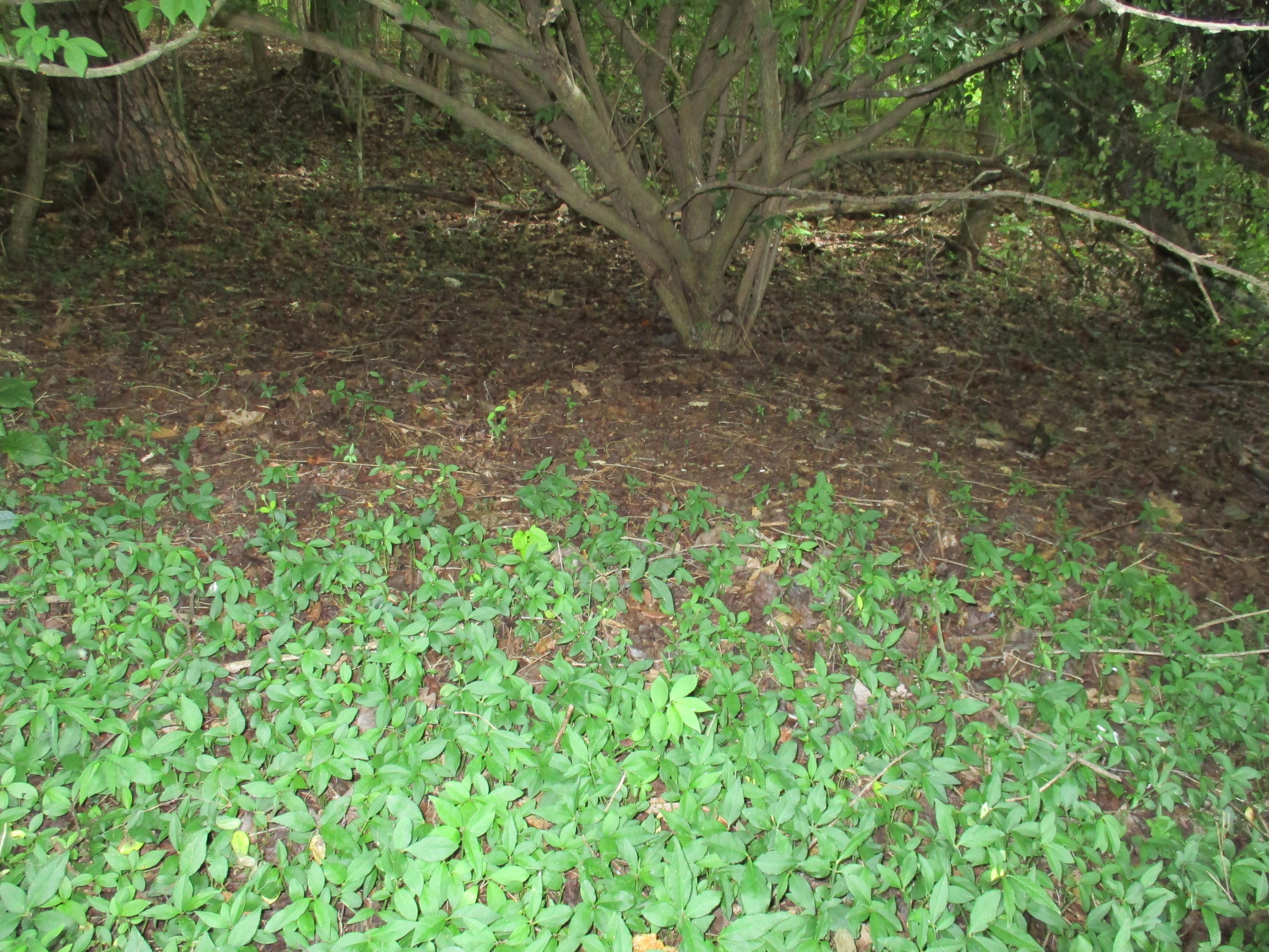 Image of seedlings