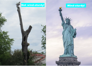 Cover photo for Wind, Trees, and Structures